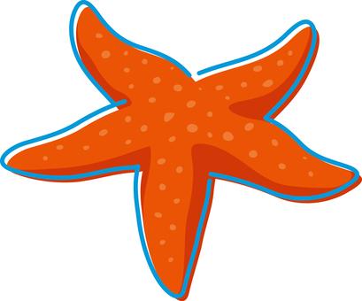 Summer image starfish