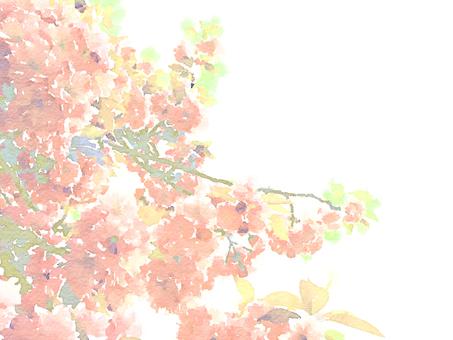 樱花水彩风格