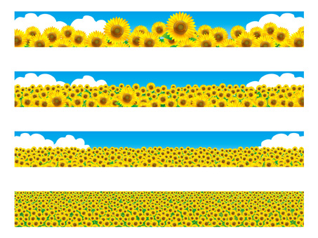 Banner landscape: sunflower field