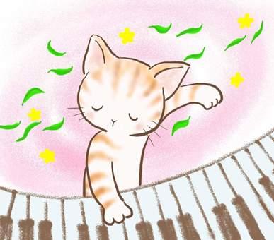 피아노 고양이 43