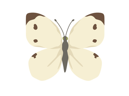 Animal _ Bug _ White butterfly _ No line