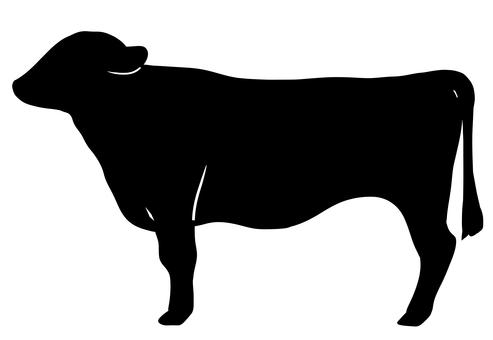 Bull black