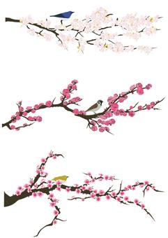 Sakura · plum · peach flower set