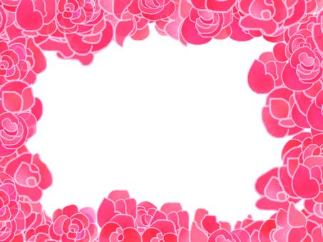 Begonia pink frame