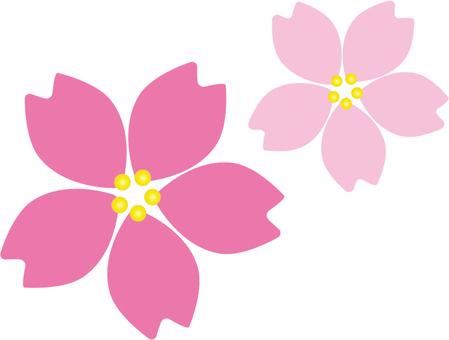 Cherry blossom petals up 001
