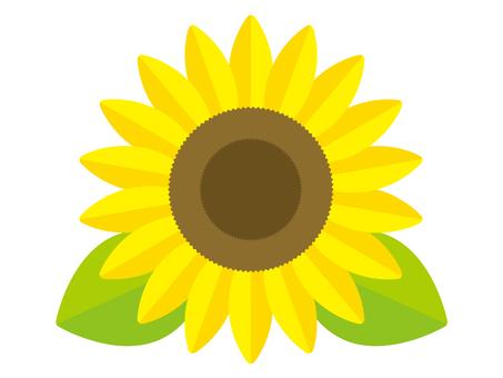 Sunflower illustration