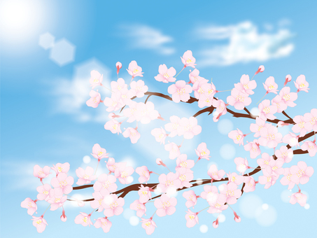 Cherry blossoms and clouds