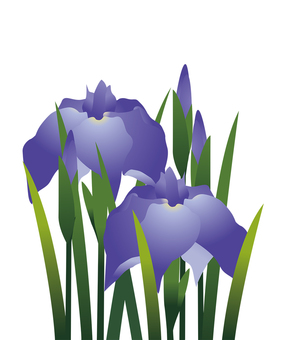 Iris flower 8