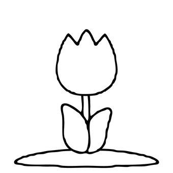 【Main line spring】 Tulip material 0002