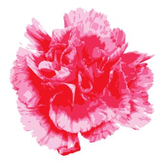 Carnation 04