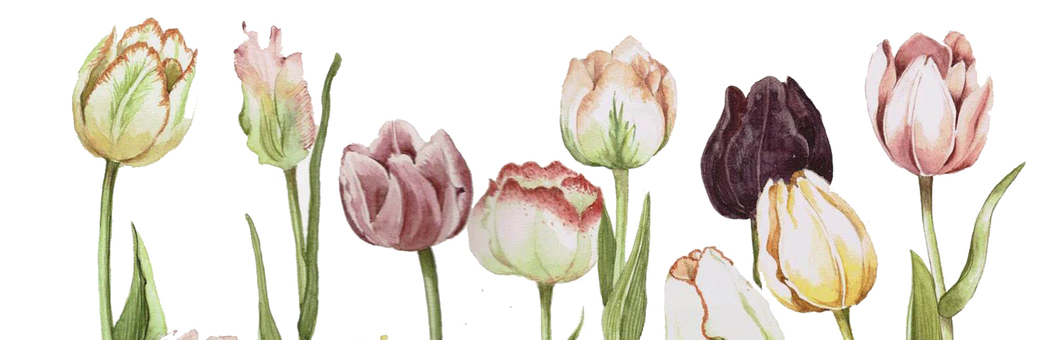 Chic color tulips