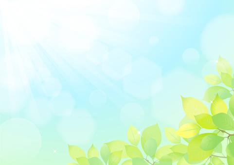 Midori background material 1