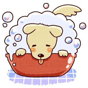 狗被洗頭(快樂)