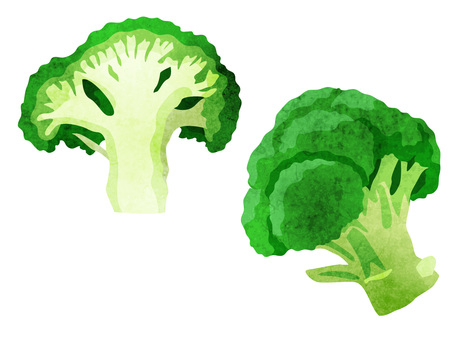 Ingredients _ vegetables _ broccoli _ watercolor