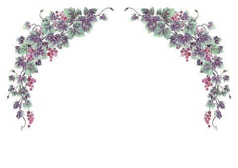 Grape illustration frame 02-1 (white line)