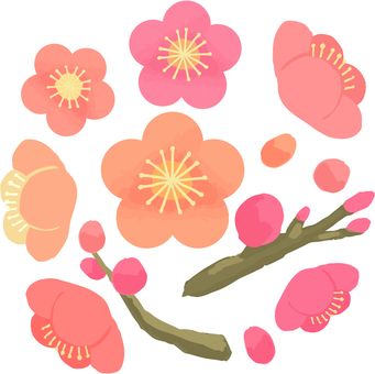 Dense plum