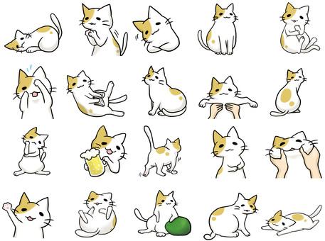 부티 고양이 세트 1