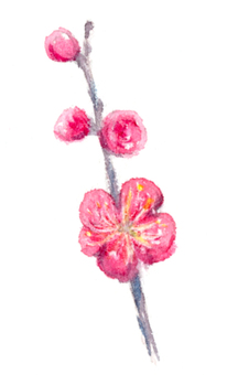 梅花與透明水彩畫2