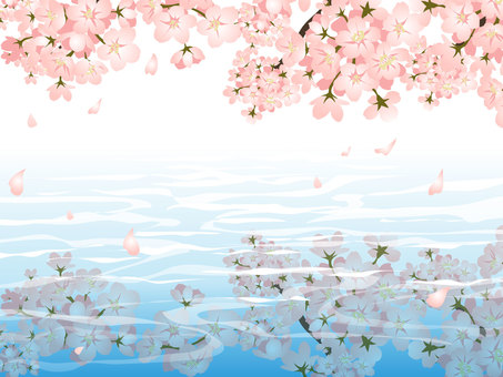 Cherry blossoms and the water surface