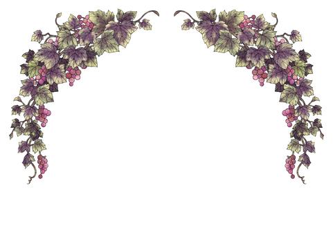 Grape illustration frame 06-3 (black line)
