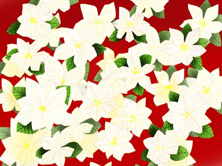 Poinsettia white background red