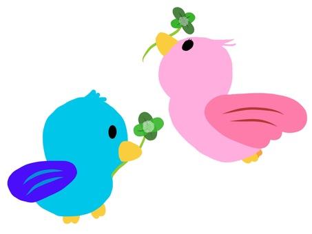 Birds and Clover