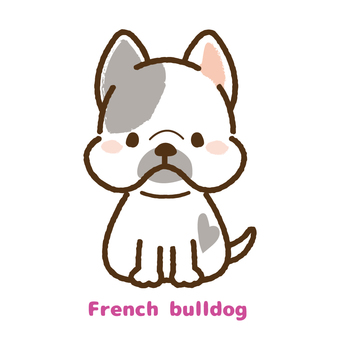 French bulldog frontal view