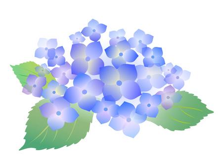 5605. hydrangea, blue 1