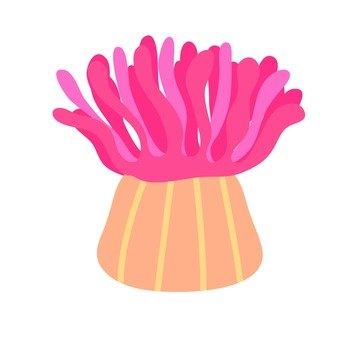 Sea anemones 3