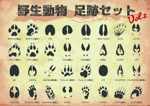 Wild animal footprint set 2