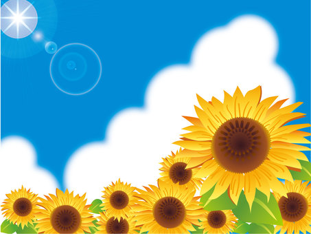 Blue sky and sun and sunflower field