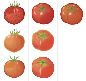 Tomato 7 / Vegetable