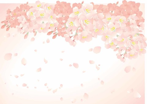 Sakura background 02