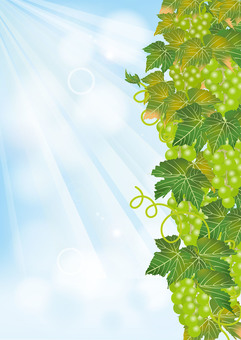 Aozora & Grape 8