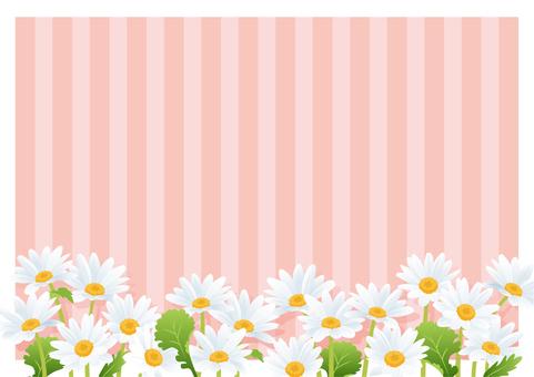 Daisy / Hinagiku (Pink)