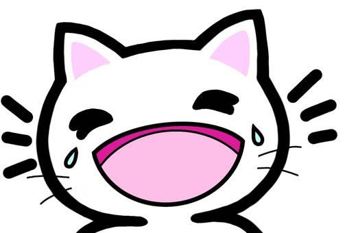 Laughter laughter laughing cat fun