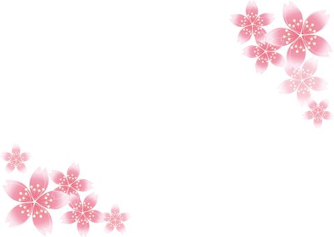Sakura Sakura 23