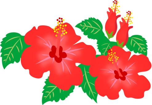 Hibiscus material 1