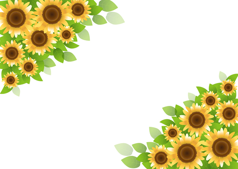 Sunflower 40