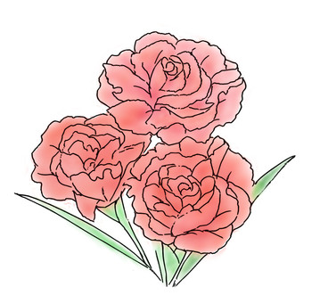 Carnation 01