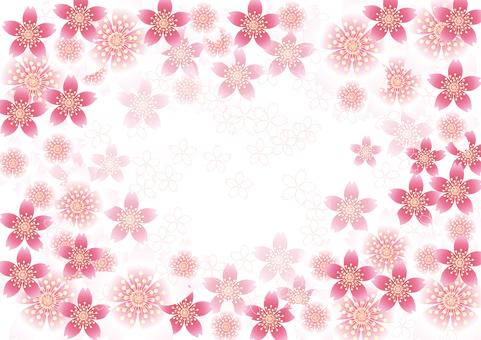 벚꽃의 꽃 86
