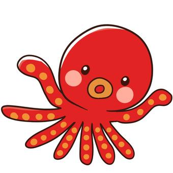 Half-summer students · Octopus