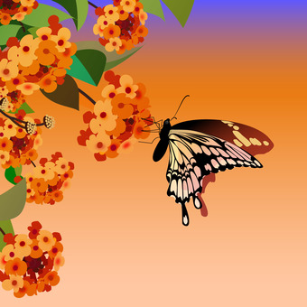 Lantana and swallowtail