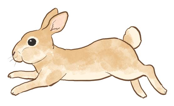 Rabbit_Splash