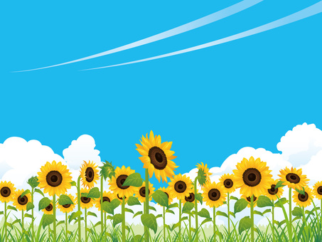 Summer refreshing sunflower field (sunflower) background 01
