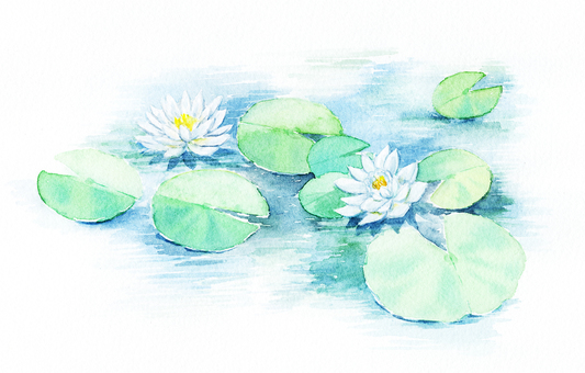 White lotus flower drawn with watercolor