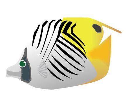 Fish-12 Citrus tin medaka