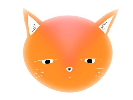 Cat · Orange