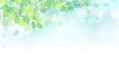 Leaf 312