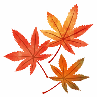 Autumn leaves / three maples